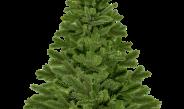 Kerstboom- en vuurwerkinzameling op 4 januari