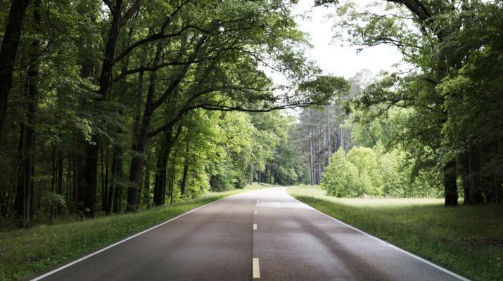 twee-baans asfaltweg tussen bomen door