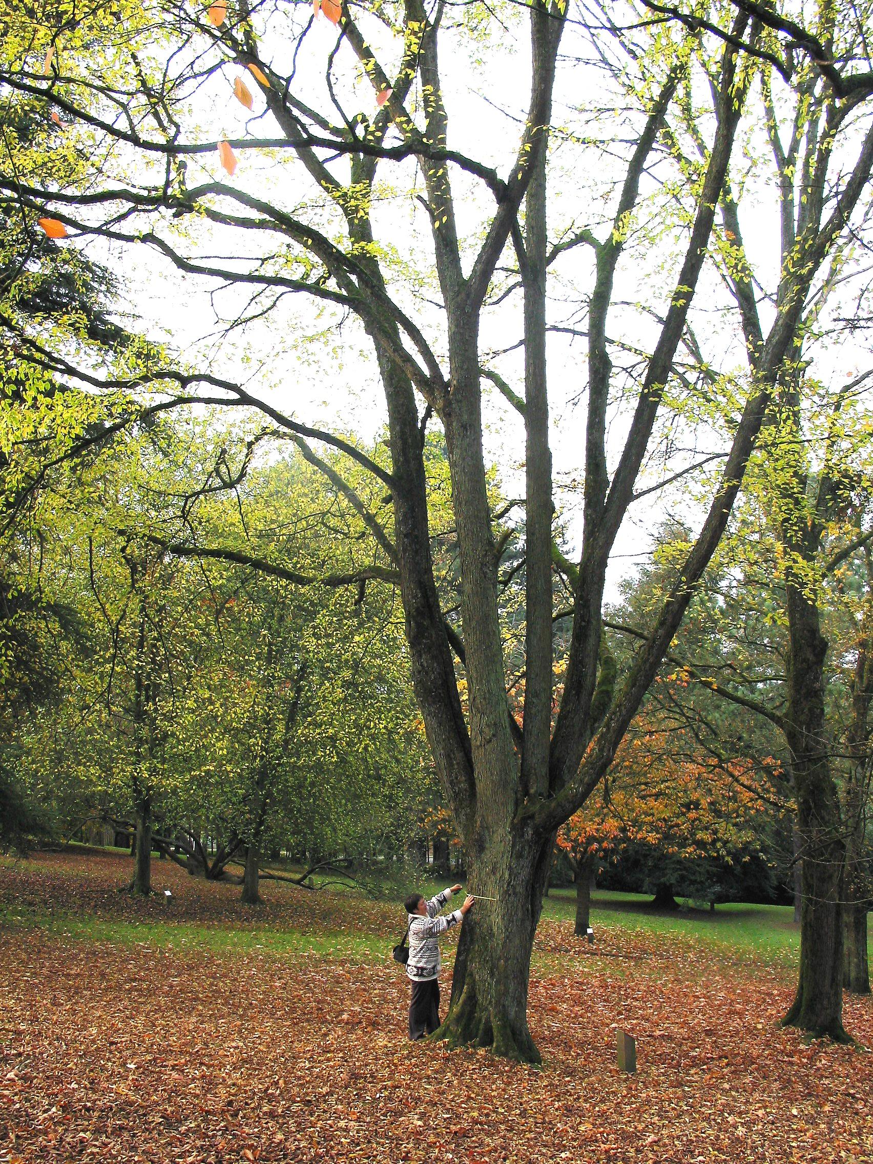 Persoon tegen hopbeuk in het park