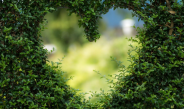 hartvorm in groene heg