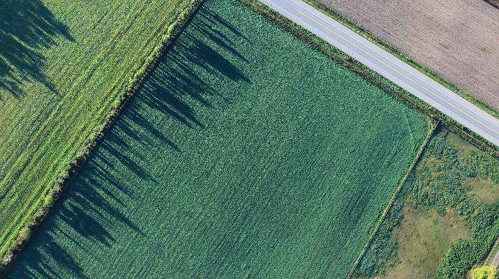 luchtfoto van weg en weiland met schaduw van bomen