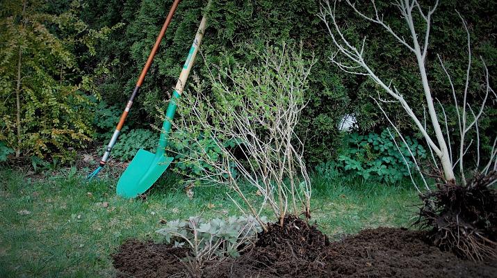 struiken met tuingereedschap
